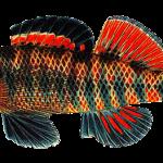 Fish Decoys Net